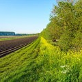 Mainstreaming biodiversity to create sustainable agriculture
