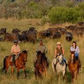 Ten reasons why you need to experience a luxury Botswana safari