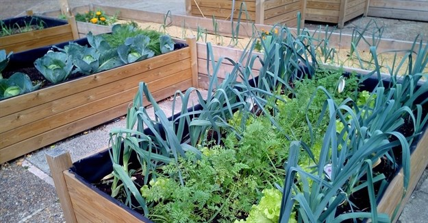 #BizTrends2017: Fresh urban farming trends