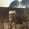 Eco-friendly farm owners 'lose everything' in Paarl wildfire