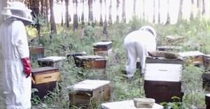 Meet Mthatha beekeeper Thoko Njemla