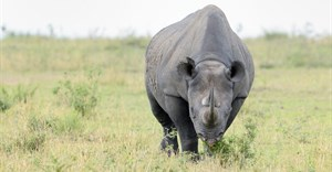 TomTom teams up with StopRhinoPoaching.com in fundraising initiative