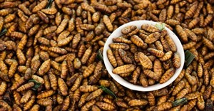 Eating insects has long made sense in Africa. The world must catch up