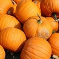 Checkers donates to Heidelberg Giant Pumpkin Festival