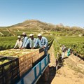 Agriculture dept targets creating 60,000 jobs