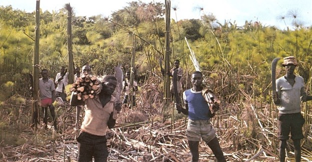 How to unlock the potential of papyrus wetlands in Africa