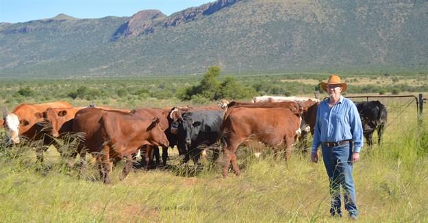 Langside oxen