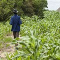 Invest in agriculture, Africa urged