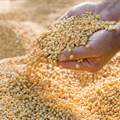 JSE launches Soya Bean Crush futures contract