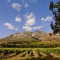 Upper Blaauwklippen vintners hosts annual wine tasting experience