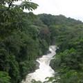 The superhighway threatening Nigeria's tropical rainforest
