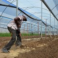 The pros and cons of commercial farming models in Africa