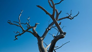 Western Cape drought holds serious implications for deciduous fruit industry