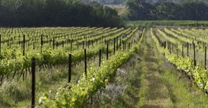 The organically grown vineyards of Avondale Wine. Image Source: