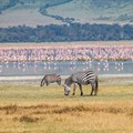 Ngorongoro: A sparkling tourism jewel