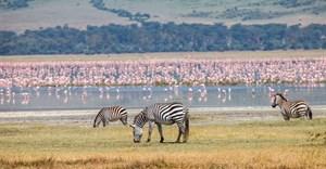 Ngorongoro: A sparkling tourism jewel