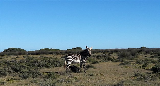 Five reasons to visit the De Hoop Nature Reserve