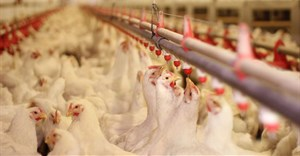 Astral doing 'all in its power' to contain bird flu