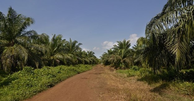 Africa's tropical forests could be next in line as global food demand grows