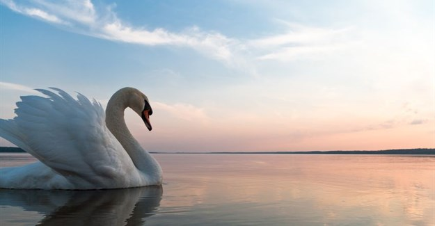 How advertising's ugly duckling has turned into a swan