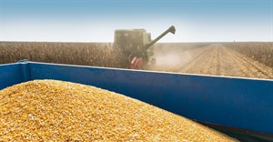 Record harvest still expected as maize crop estimate rises
