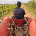 WOSA documentary showcases SA wine industry transformation
