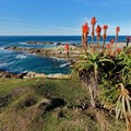 Tourism bodes well for Cape Garden Route and Klein Karoo business