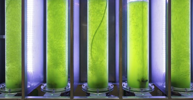 Algal biofuel production is neither environmentally nor commercially sustainable