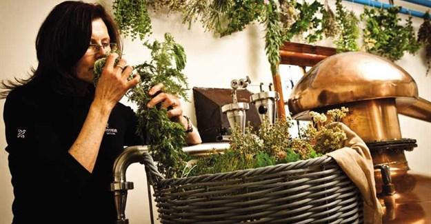 Lorna Scott adds female fynbos flair to SA's gin segment