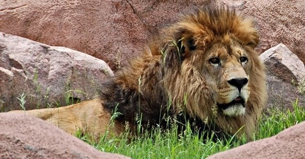 How to save zoos? Focus on education, conservation