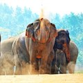 Tips on how to have an ethical elephant experience