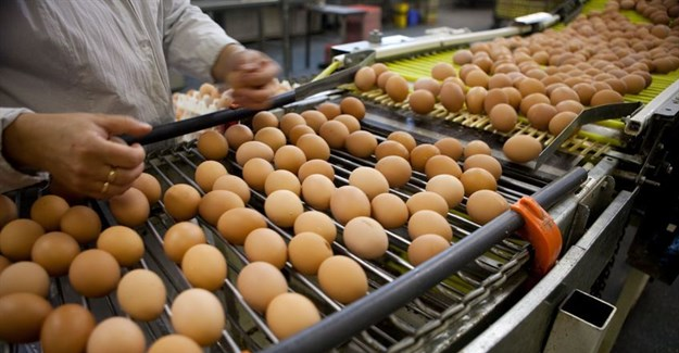 Contaminated eggs show continuing problems with supply chain