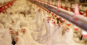 Avian influenza containment crucial for poultry markets