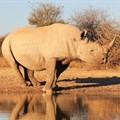SA's first online rhino horn auction set to open