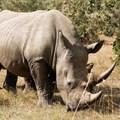Audit into stockpiles of rhino horn underway