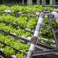 #InnovationMonth: Revolutionising agriculture through urban farming