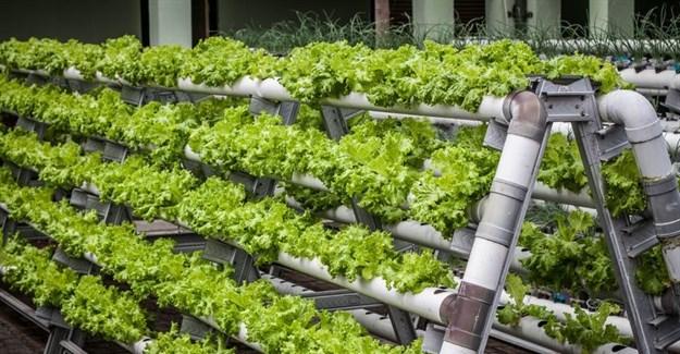 #InnovationMonth: Revolutionising agriculture through urban farming