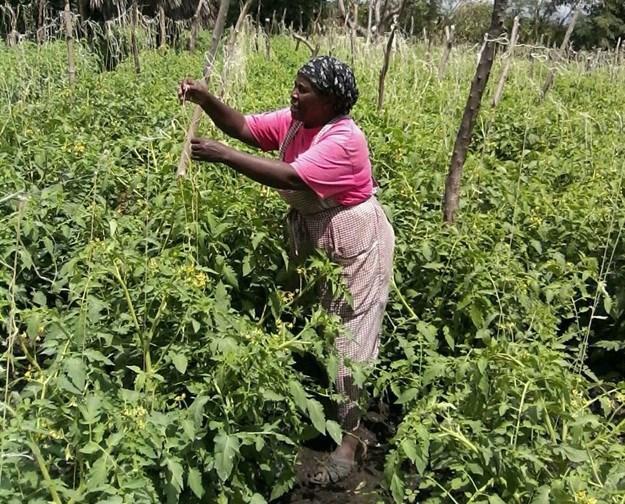 Tabitha Muthoni, a smallholder farmer near Mombasa, Kenya. Source: Syngenta