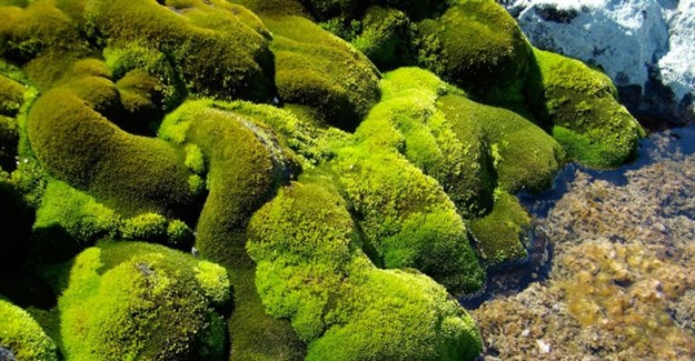 Mosses are sensitive to even minor changes in their living conditions. Sharon Robinson, Author provided