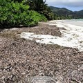 Innovative business in Seychelles to turn seaweed into fertiliser