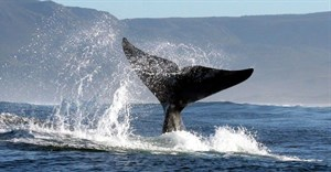 From wine to whales, what to do in three days in Hermanus