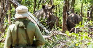 MyPlanet Rhino Fund supports variety of rhino conservation, education projects in 2017