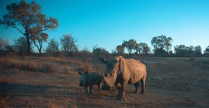Predictive analytics, cognitive computing, big data used in anti-rhino poaching solution