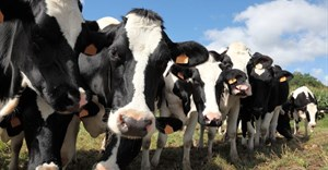 R32m boost for dairy trust