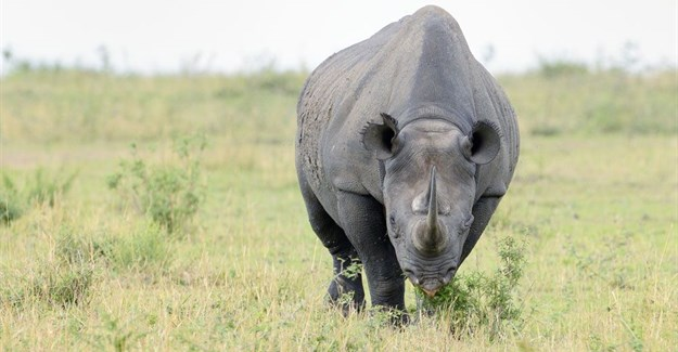 SANParks calls for further assistance in fight against rhino poaching