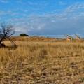 Bernard DUPONT via  - Auob Riverbed, Kgalagadi Transfrontier Park