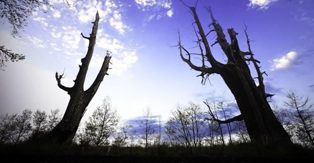 Huge spike in global carbon emissions linked to El Niño