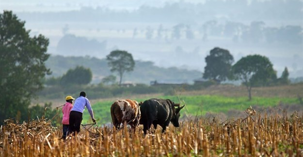 #WorldFoodDay: Access to data vital for empowering smallholders, building resilience