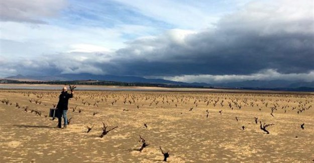 Vines that were once part of Zeekoekraal, a farm in Villiersdorp, Western Cape. The drought in the province is set to hamper the export-based wine industry. (Image Supplied)