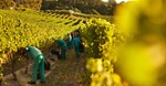 Policy interventions essential to optimise South Africa's agricultural output